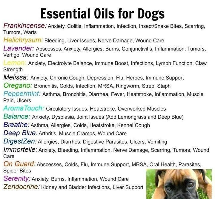 Can You Use Melaleuca On Dogs
